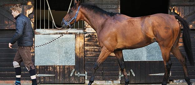 Pravila za varno ravnanje s konji